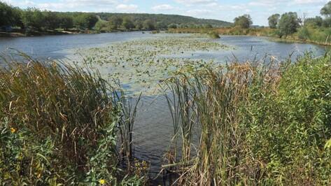 Воронежская компания восстановила земли после попытки осушения озера Круглое