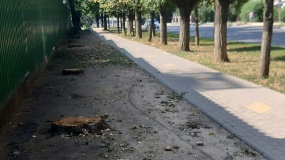 Воронежцев обеспокоили вырубленные у Пивзавода деревья