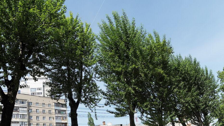 Новые деревья в Воронеже посадят в 14 скверах и на 25 улицах