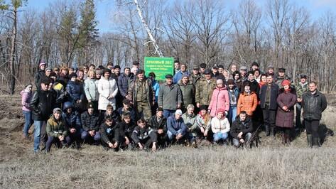 В Новохоперском районе высадили 1700 сеянцев дуба