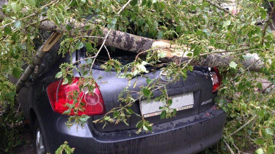 В центре Воронежа дерево и столб рухнули на машины
