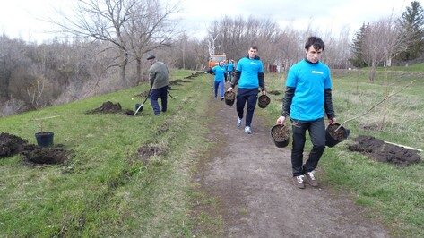 В Семилукском районе в рамках нацпроекта «Лес Победы» появились десятки новых аллей