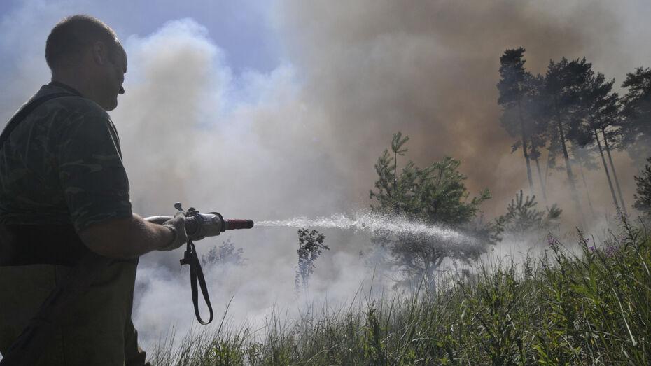 Спасатели локализовали 2 из 3 крупных пожаров в Воронежской области