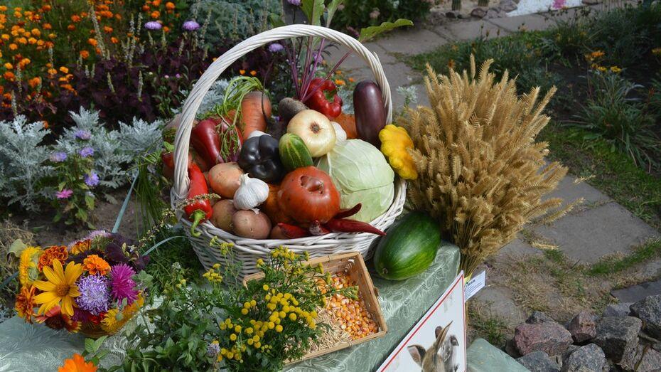 Павловских детей и подростков пригласили поучаствовать в районном конкурсе «Господин Урожай»