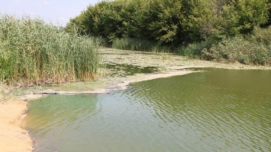 Экологи поставили рекам Воронежской области общий диагноз
