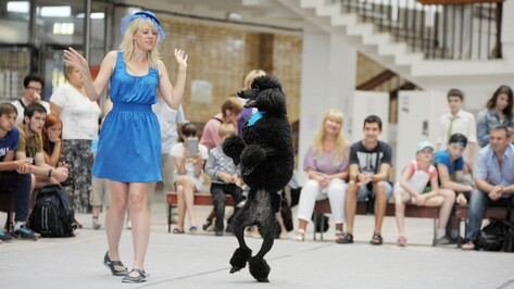 На параде собак в Воронеже пудель станцевал под Джо Дассена