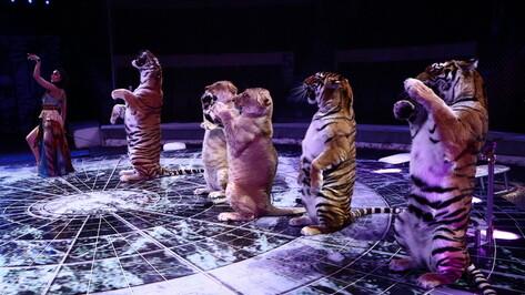 Воронежский цирк откроется 13 февраля после 11 месяцев карантина