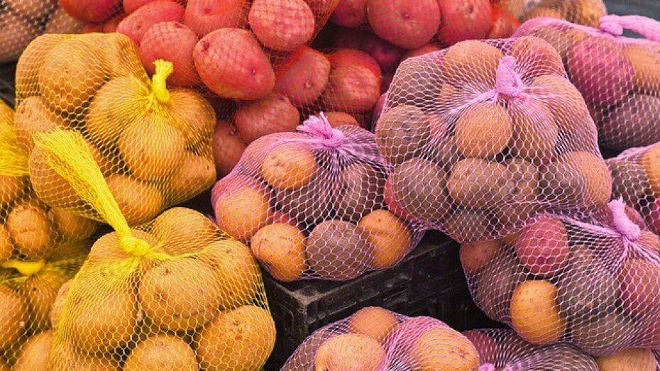ГК «Логус» обеспечит воронежские магазины 8 тыс т овощей