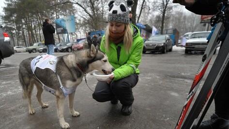 В воронежской Лыжне России «участвовала» собака по кличке Ума
