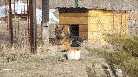 Воронежские зоозащитники осудили казнь липецкой овчарки-убийцы