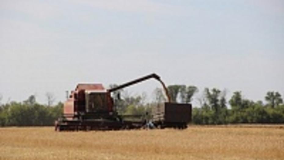 В Поворинском районе намолотили более 27,5 тыс тонн ранних зерновых культур