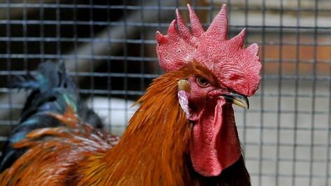 «Уничтожить – единственный способ». Зачем истребили птиц в Воронежском зоопарке