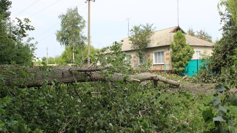 В ольховатском поселке упавший из-за урагана тополь повредил 2 ЛЭП