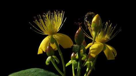 Выставка в воронежском музее поможет изучить лекарственные растения