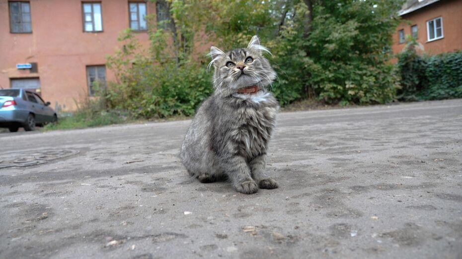 Власти Воронежской области ввели карантин по бешенству животных в Левобережном районе