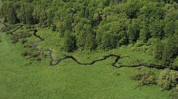 Вокруг Воронежа создадут зеленый пояс