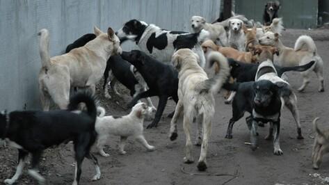 На борьбу с бездомными собаками в Советском районе Воронежа потратят до 2,98 млн рублей