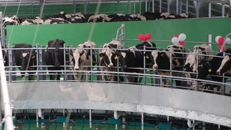 В Воронежской области заработал очередной современный молочный комплекс