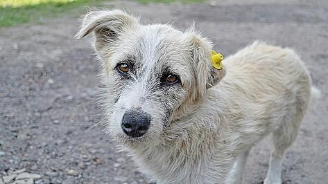 В Бутурлиновке 14 бродячих собак пометили специальными чипами