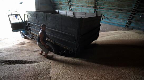 Агроном из Воронежской области собрал группу водителей для кражи почти 400 т зерна