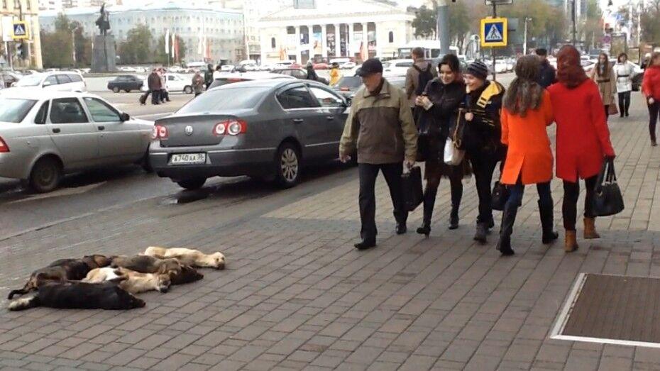 Воронежский зоозащитник вновь принес к дверям мэрии мертвых собак