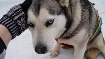 В Семилукском районе началась массовая вакцинация животных против бешенства