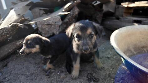Зоозащитники заберут из домов воронежцев посылки для животных