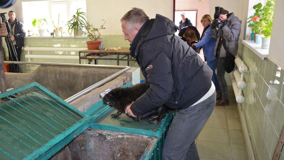 В Воронежском заповеднике открылся аквариум для бобров
