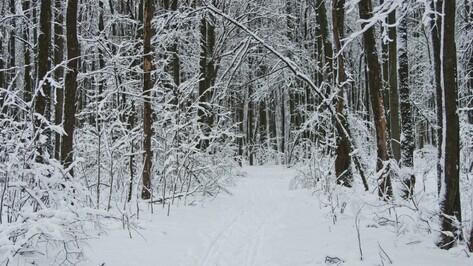 Воронеж встретит зиму снежной и холодной погодой