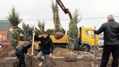 На комфортную городскую среду в Воронежской области в 2018 году выделят 600 млн рублей