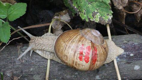 В Воронежском заповеднике впервые за два года появилась редкая улитка