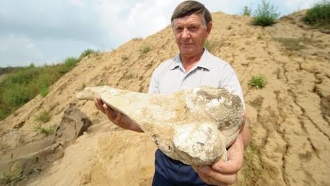Кость мамонта нашли во время строительных работ в Рамонском районе
