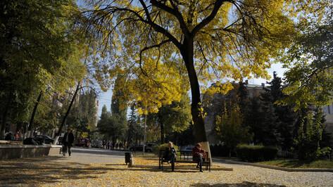 Мягкая осень согреет Воронеж на рабочей неделе