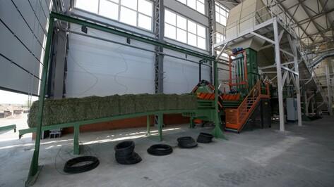 В Воронежской области заработал завод по сушке люцерны