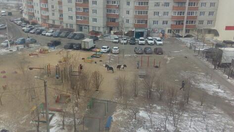 Воронежцы сфотографировали гулявших по двору лошадей