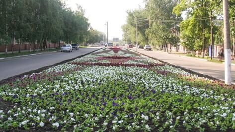 В Острогожске к 70-летию Победы высадят 95 тыс цветов