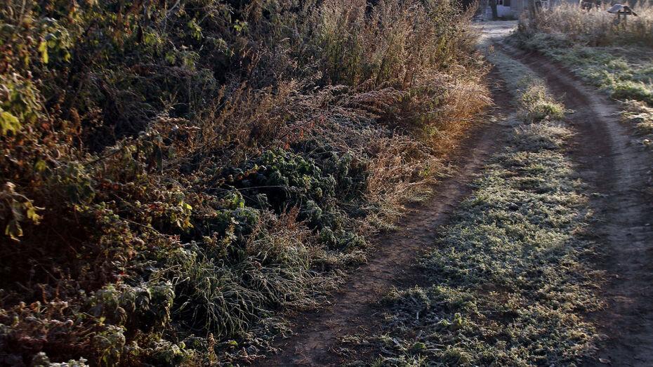 Метеорологи предупредили о ночных заморозках в Воронежской области