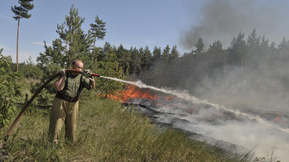 За сутки в Воронежской области сгорели 110 га леса