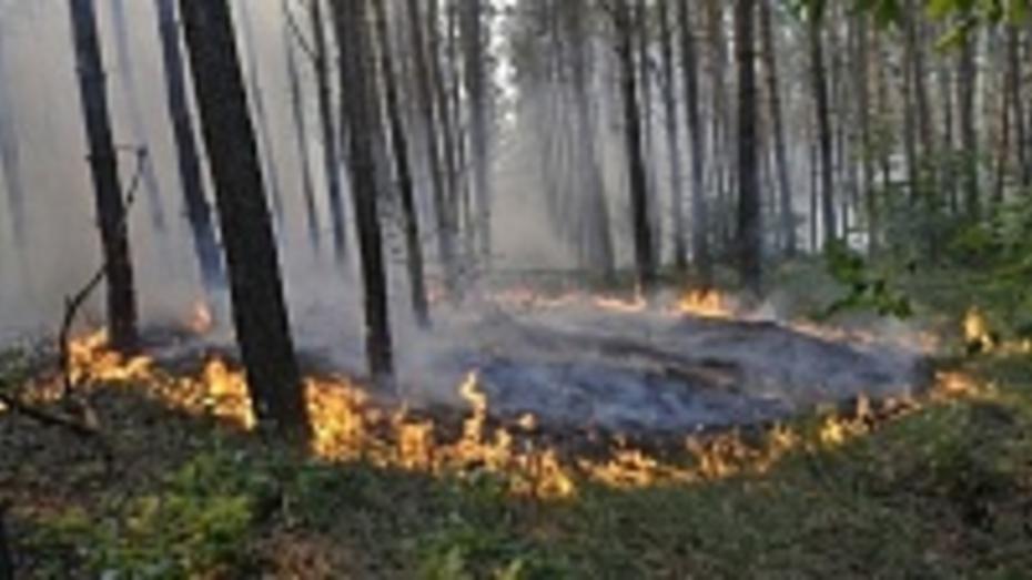Воронежская область получила оборудование для борьбы с лесными пожарами