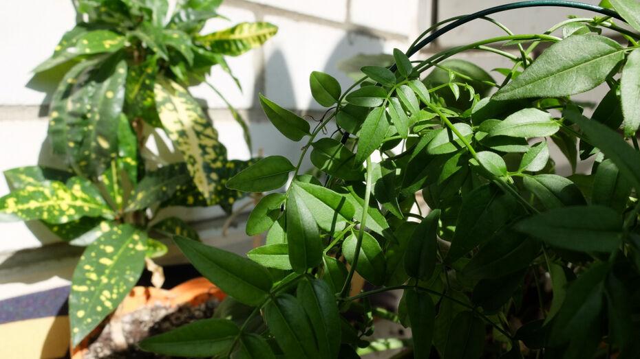 Цветочный своп и мастер-класс по уходу за растениями пройдут в воронежском экоцентре