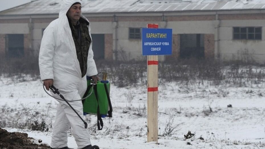 В Нижнедевицком районе завершились работы по оборудованию могильника в очаге АЧС