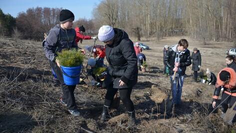 В Верхнемамонском районе в рамках акции «Лес Победы» высадили более 11 тыс саженцев