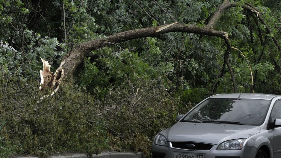 Метеорологи предупредили воронежцев о сильном ветре 19 и 20 мая