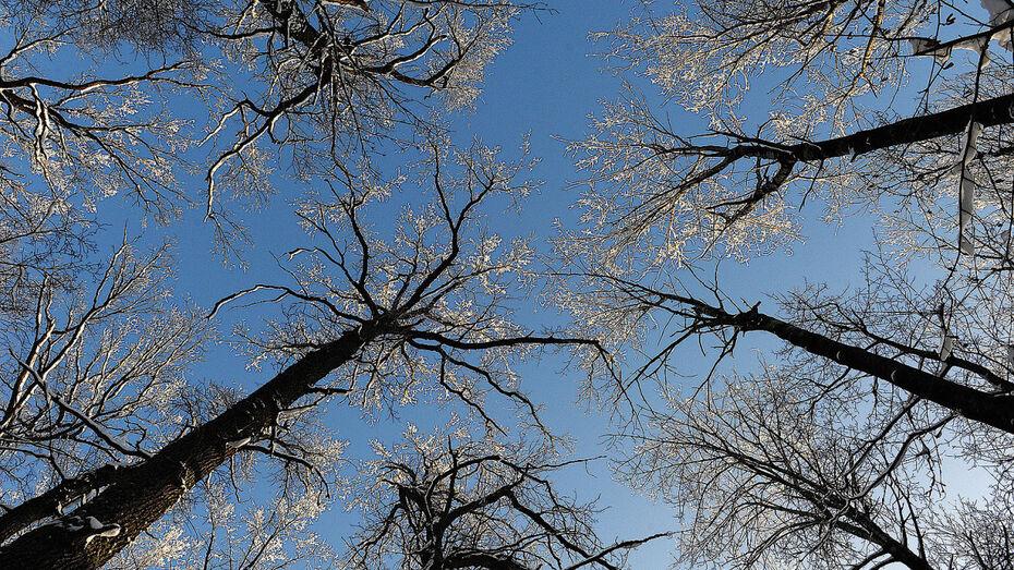 В Воронежской области на проект «Сохранение лесов» выделили 919,1 млн рублей