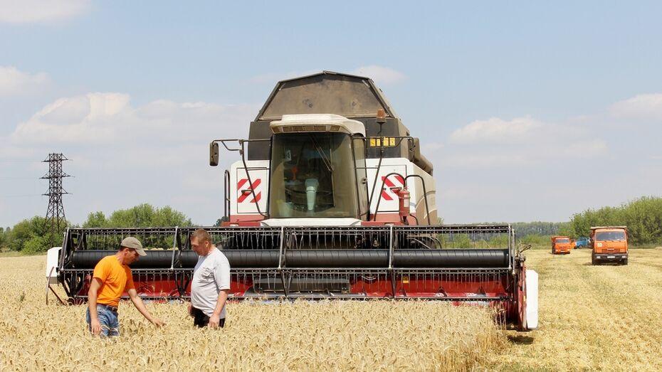 В Таловском районе собрали рекордный урожай зерна за 40 лет