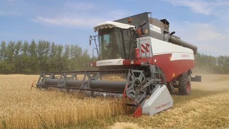 В Новоусманском районе собрали самый большой урожай зерновых за последние годы