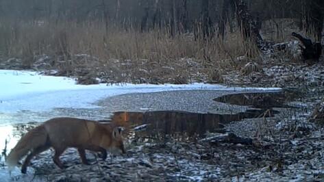 В Воронежской области сотрудники заповедника опубликовали видео из жизни диких животных
