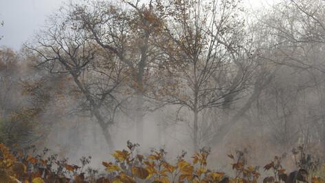 Синоптики: на рабочей неделе в Воронеже будет до -4 градусов