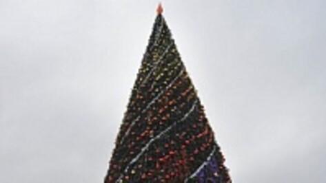 Перед открытием новогодней елки на площади Ленина в Воронеже установят турникеты с металлоискателями