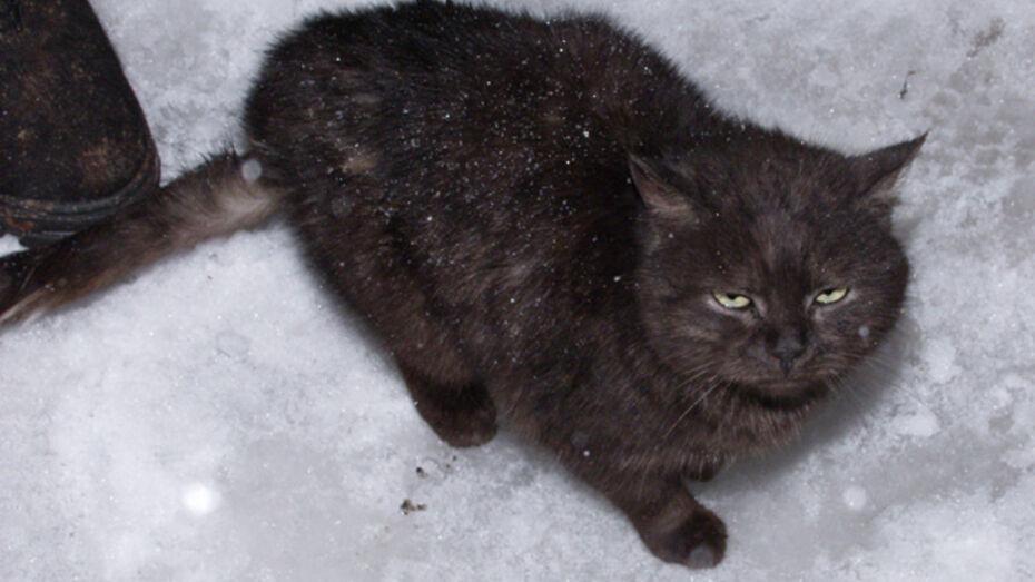 Воронежские фотографы помогут бездомным кошкам